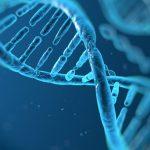 ADN-ul neandertal din noroiul pesterii prezinta doua valuri de migratie in Eurasia