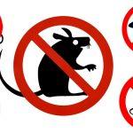 Cum să scapi de șoareci în doar două săptămâni